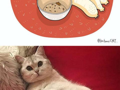Мемы с котиками